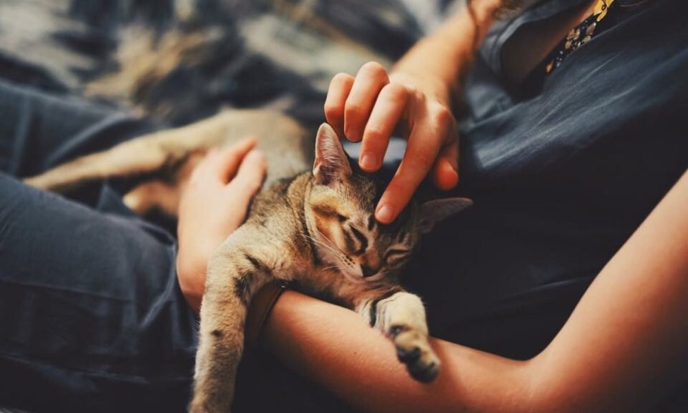 Tiger tested positive for COVID-19 — is your cat at risk?